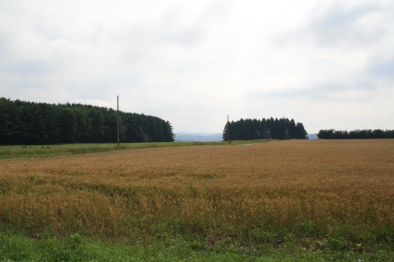 Rural view, looking east from the cemetery.